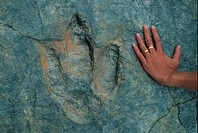 Fossils Dinosaur footprint with human hand for size comparison / Spain