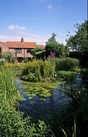 Wildlife pond and garden, Norfolk, England, july