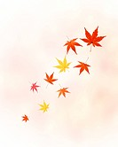Maple leaves against coloured background, close_up