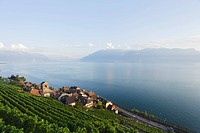 View over vineyards and Saint Saphorin to lake Geneva, Lavaux, Canton of Vaud, Switzerland