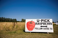 U Pick Raspberry Sign