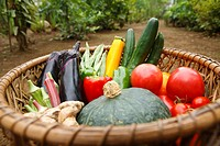 Fresh vegetables in basket, close_up