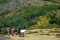 Viewpoint. Ayllón Massif. Parque Natural Hayedo de Tejera Negra. Guadalajara province. Castilla-La Mancha. Spain.