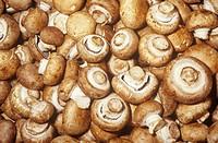 Commercial Mushroom variety Cremini Agaricum bisporus