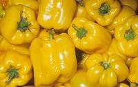 Bell Pepper variety Sun Ray Capiscum annuum