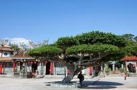 Chen Yuan Kwang Temple and botanic garden Zhishan under blue sky, Taipei, Taiwan, Asia