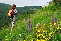 Woman walking through a meadow full of flowers, Monte Generoso, valley of Muggio, Ticino, Switzerland