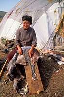 Russia, person cleaning caribou skin outside tent, Siberia