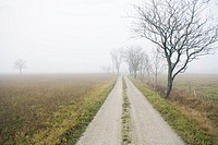 A road covered in fog.