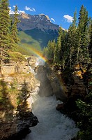 A vertical image of the Athabasca falls on the Athabasca river with a colorful rainbow and Mount Kerkeslin looming above all.