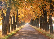 Autumn canopy of colors on tree_lined country road in Sweden