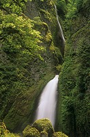 Lush and mossy landscape around Wahclella Falls, Columbia River Gorge National Scenic Area, Oregon, USA.
