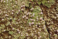 Moss and fungus on a slope in Ecuador.