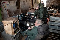 Sheep farming, shepherds scanning Swaledale ewes for pregnancy, Chipping, Lancashire, England