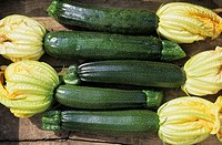 Freshly harvested organic courgettes