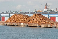 Conifer logs, waiting for shipment at docks, Sweden, june