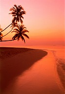 Palm trees over calm shore at dawn in Maldive Islands