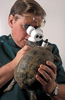 Vet examining pet tortoise through visual/opto device, in veterinary surgery