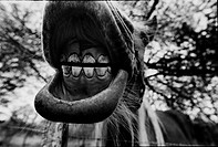 Close_Up of a horse mouth. Sweden