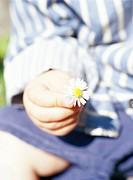 A girl holding a daisy.