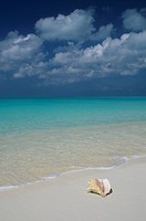 Conch shell Strombus gigas on a sandy beach and clear Atlantic Ocean water, Bahamas.