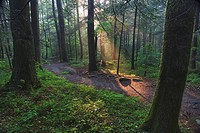 Sunlight streaming through hardwood forest on path to Laurel Falls, Great Smoky Mountains N.P. TN