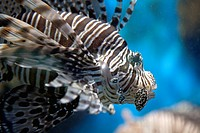 An exotic fish close_up.