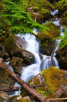 Small waterfall near grotto on Stevens Pass, Washington, USA
