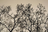 Trees Sweden