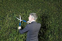 Businessman trimming hedge