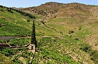 Banyuls vineyards, Languedoc-Roussillon, France