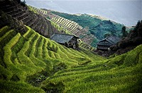 View of the Long Ji rice fields, Guangxi Province