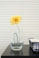 Flower in vase on office desk