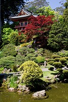 Trees in a park, Japanese Tea Garden, Golden Gate Park, San Francisco, California, USA