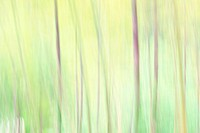 Bamboo forest, soft focus, full frame