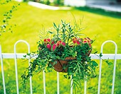 Pot plant containing a variety of different plants attached to a fence