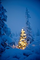 Christmas tree with white lights in a hoarfrost covered spruce forest, moonlight, fog, winter, Eureka Summit, Alaska.