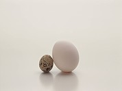 Quail Egg Next to a Hen´s Egg