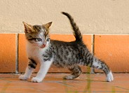 half_breed cat