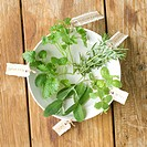Herb cuttings in bowl of water