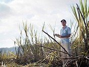 Man With Clipboard In Sugar Cane