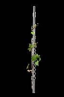 close_up of flute with ivy