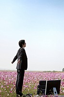 businessman standing on desk in cosmos flowers field