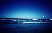 ocean, beach