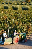 Farmer driving a tractor in Lujan de Cuyo, Mendoza region, Argentina, South America