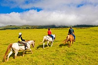 Horseback riding at Parker Ranch, The Big Island, Hawaii, United States of America, North America