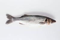 A sea bass