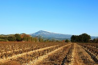 Mont Ventoux and vineyards in winter, Vaucluse, Provence, France