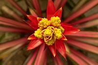 Red and yellow flower close_up