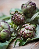 Freshly picked artichokes